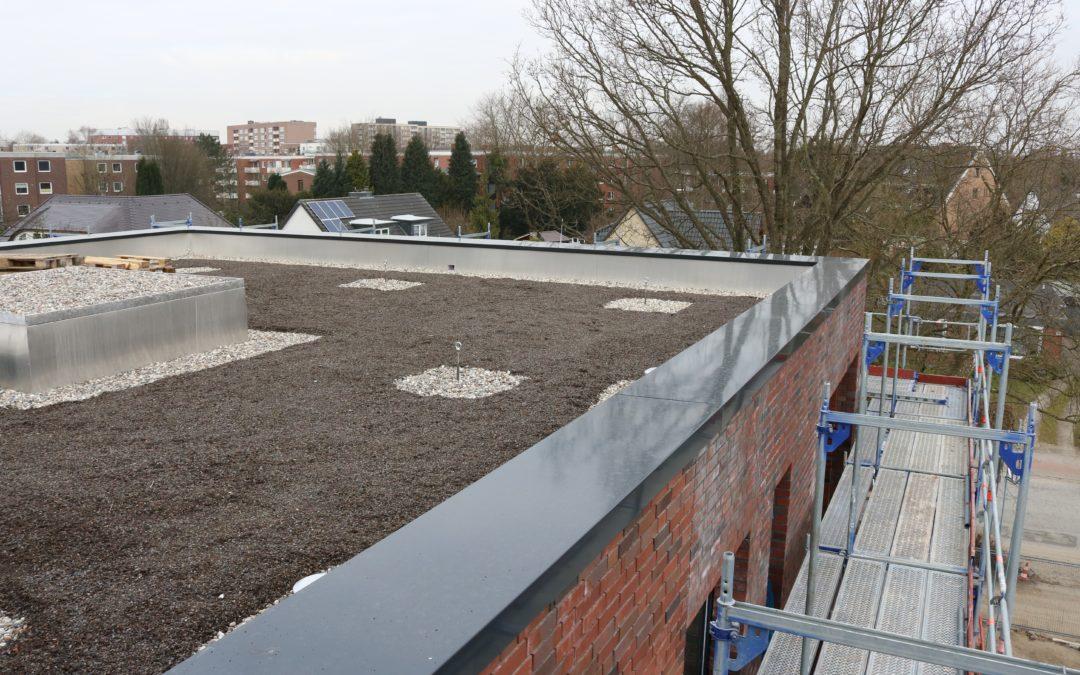 Flachdach sanieren: So entsteht ein begrüntes Flachdach