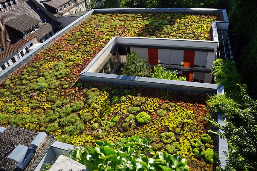 Grüne Flachdächer als Lebensraum für Bienen und gefährdete Insekten