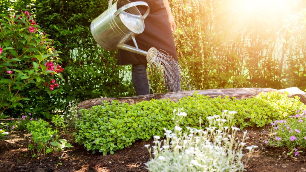Ökologisch bauen: ein Blumenbeet mit vielen verschiedenen Pflanzen wird mit einer Gießkanne gewässert.