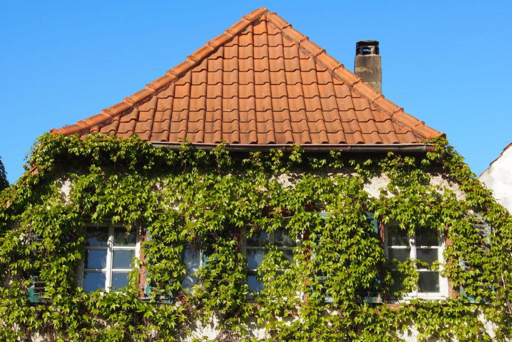 Ökologisch Bauen: eine Hausfassade mit Begrünung